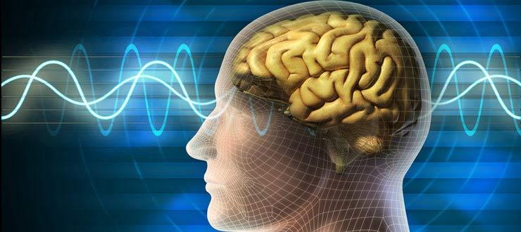 Bachelor psychologie for Psychologie studieren hamburg